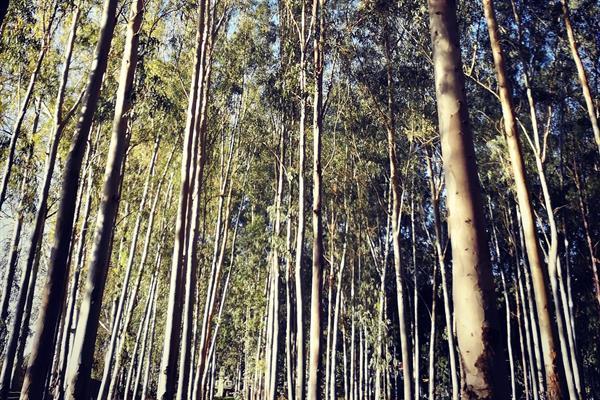 יער אינסוף האפשרויות