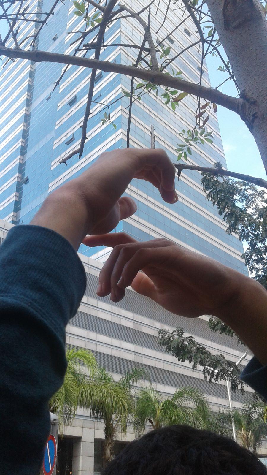 ידיים טבע עיר