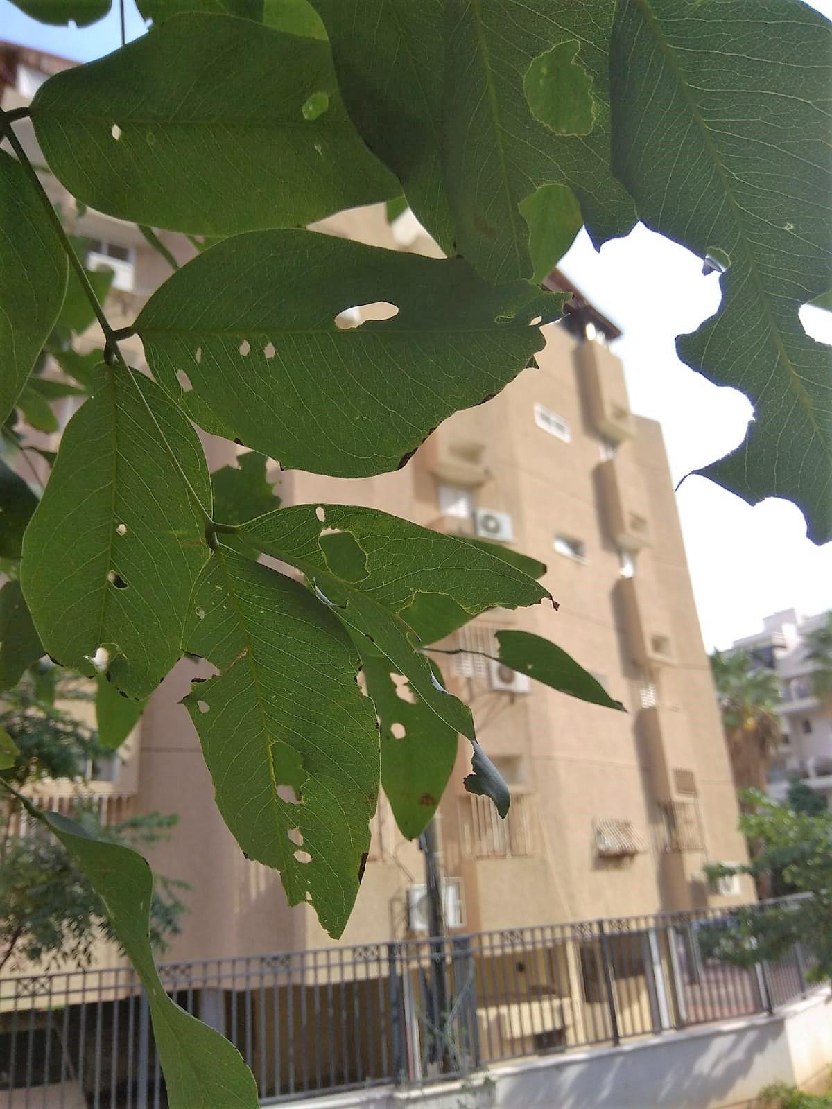 ירוק בתוך העיר